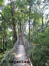 Canopy bridge in Loleygaon