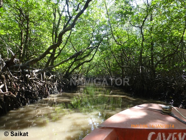 Mangrove Forest & Backwater- - Baratang