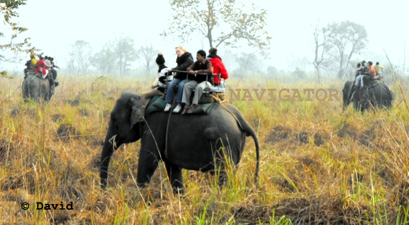 Jaldapara Elephant Safari