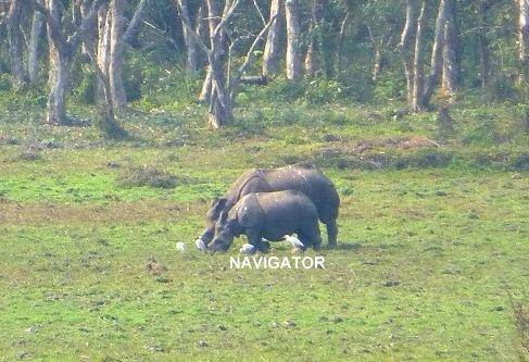 Rhino - Medla WT- Gorumara