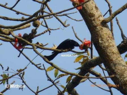 Bird - Gorumara